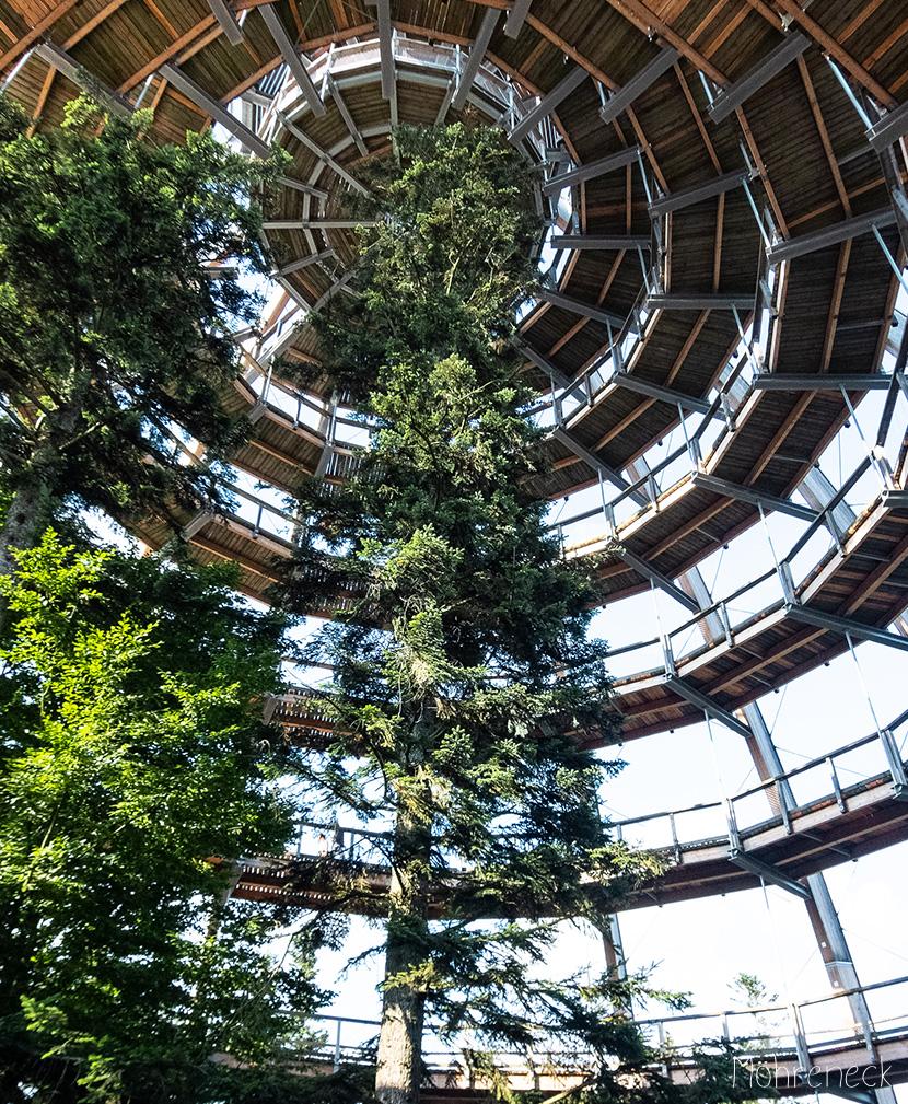 Baumwipfelpfad im bayerischen Nationalpark